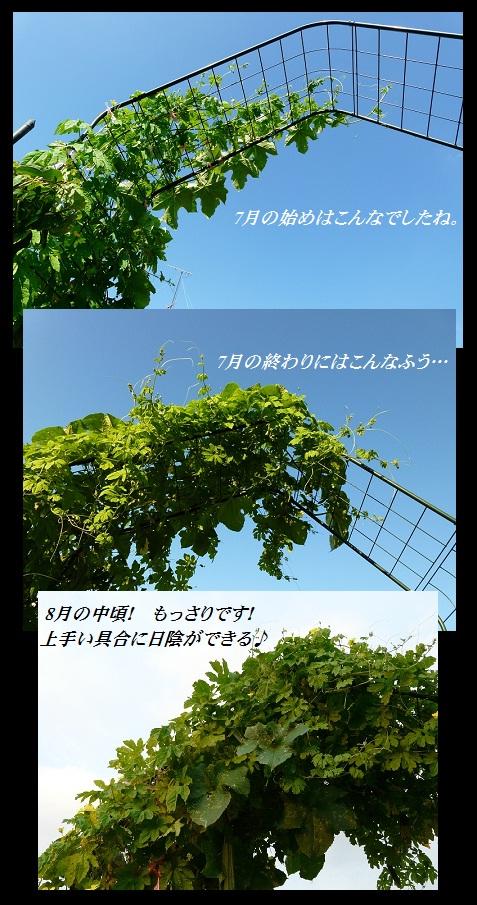 hechima.jpg